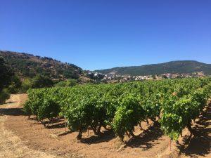 #cantinacanneddu #zibbo #delissia #cannonau #granatza #mamoiada #mamojà #wine #sardegna #italy