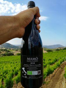 #cantinacanneddu #mamò #cannonau #giovane #zibbo #zibborosè #delissia #mamoiada #newwine #redwine #sardinianwine #italianwine