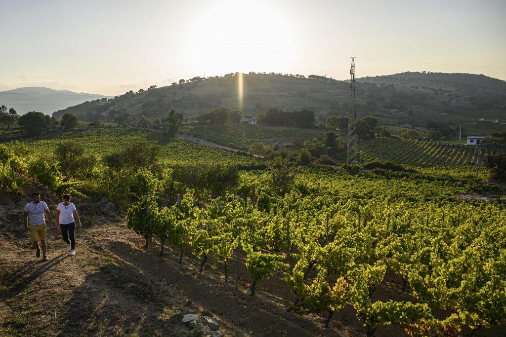 #cantinacanneddu #mamoiada #zibbo #delissia #mamò #zibborosè #sardinia #sardegna #mamojà #winefamily #winetaste #winelovers #winestory #redwine #whitewine #loacwines #organic #bio