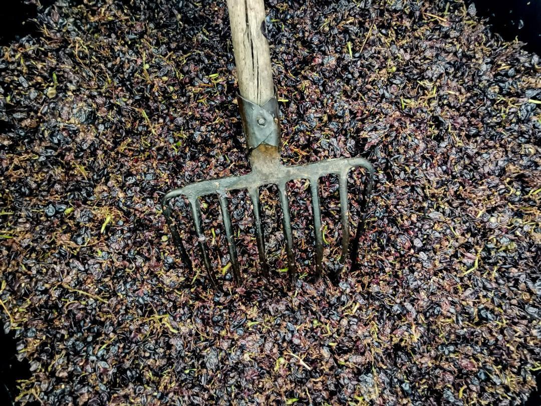 #cantinacanneddu #mamoiada #cannonau #granazza #zibbo #delissia #zibborosè #winelovers #vinidivignaioli #redwine #whitewine #sardegna #handmade #biologici #madeinitaly